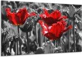 Glasschilderij Tulpen | Rood, Grijs | 120x70cm 1Luik | Foto print op Glas |  F002808