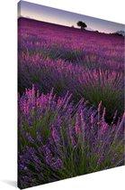 Paarse lavendel bloemen in een veld Canvas 120x180 cm - Foto print op Canvas schilderij (Wanddecoratie woonkamer / slaapkamer) XXL / Groot formaat!