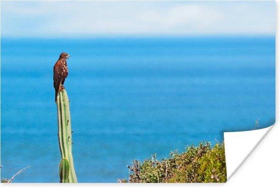 Poster - Valk op een cactus bij het strand - 180x120 cm XXL /