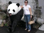 Panda Beer lopend 192 cm, Hansa