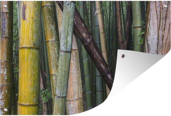 Bol Com Tuinposter Bamboebos Van Arashiyama Vele Soorten Bamboe In Het Bamboebos Van