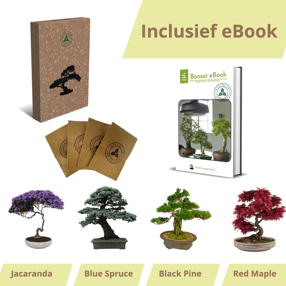 Bonsai zaden 4 soorten - Bonsai boompje - Kamerplanten - Vaderdag - Incl. E-book