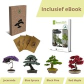 Bonsai zaden 4 soorten - Bonsai starters kit - Bonsai boompje - Kamerplanten - Moederdag - Incl. E-book