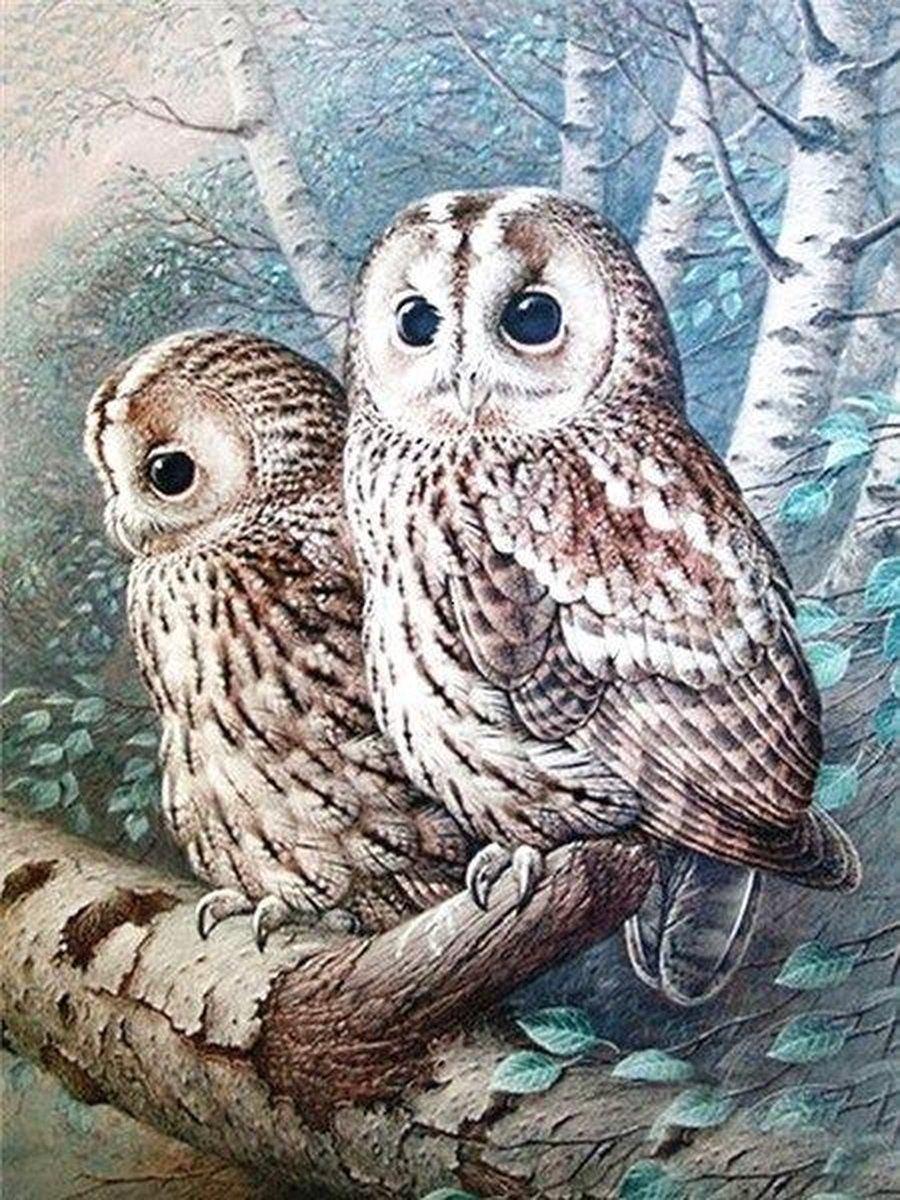Premium Paintings - Uilen op Tak - Diamond Painting Volwassenen - Pakket Volledig / Pakket Full - 30x40 - Moederdag cadeautje