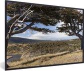 Foto in lijst - Prachtige Lenga beuk op een zonnige dag in het Nationaal park Tierra del Fuego fotolijst zwart 60x40 cm - Poster in lijst (Wanddecoratie woonkamer / slaapkamer)