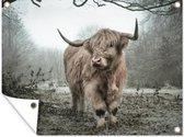 Tuinposter Schotse Hooglanders (2) - Wollige Schotse hooglander 80x60 cm - Tuindoek/Buitencanvas/Schilderijen voor buiten (tuin decoratie)