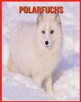 Polarfuchs: Erstaunliche Fakten & Bilder
