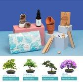 Luxe Bonsai Starters kit - Kweek Je Eigen Bonsai Boompje vanaf Zaadjes - Eco-vriendelijk en Creatief Cadeau - Moederdag