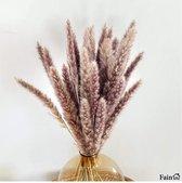 Pampas pluimen – Natuurlijke tint - 15 stuks – Pampas gras – 70 cm – Droogbloemen – Cortaderia – Droogbloemen boeket – Pampasgras gedroogd – Pampas pluimen