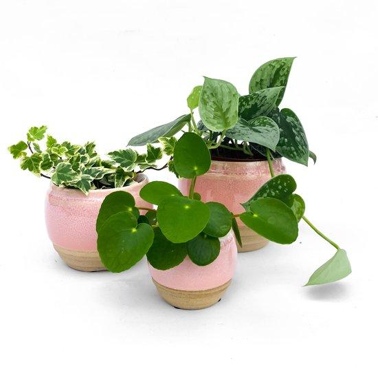 Potten set zacht roze incl. plantjes! (Urban jungle, Kamerplanten, Scandinavisch, Japandi, Bohemian)