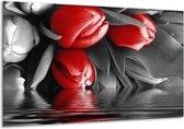 Glasschilderij Tulpen | Rood, Grijs, Zwart | 120x70cm 1Luik | Foto print op Glas |  F002859
