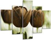 Glasschilderij Tulpen | Bruin, Groen | 100x70cm 5Luik | Foto print op Glas |  F002793