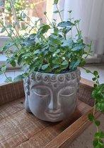 Bloempot boeddha