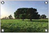 Tuinposter –Twee Bomen in Grasveld– 60x40 Foto op Tuinposter (wanddecoratie voor buiten en binnen)