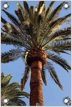 Tuinposter –Palmboom– 30x40  Foto op Tuinposter (wanddecoratie voor buiten en binnen)
