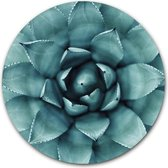 Ronde muursticker Agave Plant - WallCatcher | 30 cm behangsticker wandcirkel Cactus