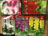 5 x 7 stuks gladiolen bloembollen pakket 5 kleuren totaal 35 stuks
