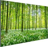 Groene bomen in het bos Aluminium 120x80 cm - Foto print op Aluminium (metaal wanddecoratie)