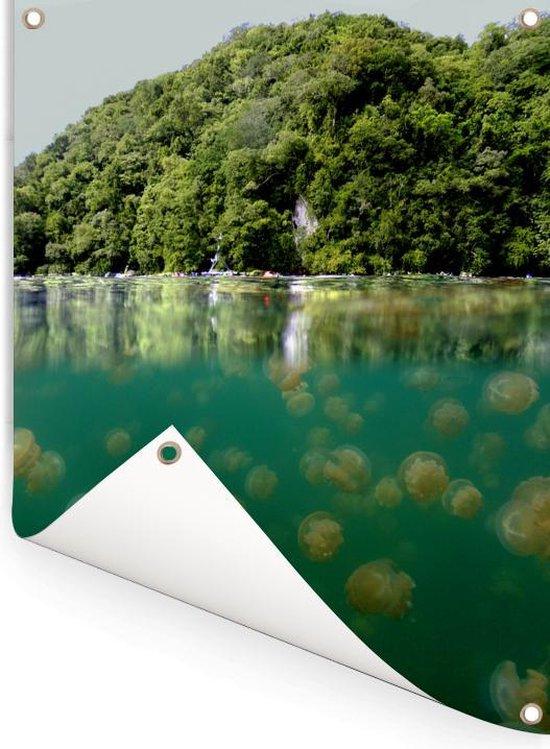 Halve onderwater foto bossen bij kwallenmeer in Palau Tuinposter 30x40 cm - klein - Tuindoek / Buitencanvas / Schilderijen voor buiten (tuin decoratie)