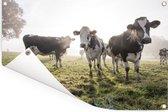 Een mistige ochtend bij de Friese koeien in het weiland Tuinposter 120x80 cm - Tuindoek / Buitencanvas / Schilderijen voor buiten (tuin decoratie)