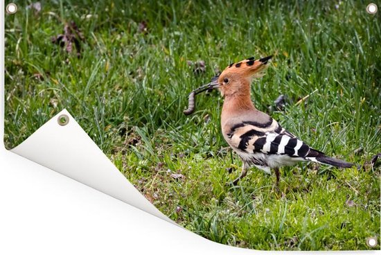 Hop met een prooi in zijn bek en loopt over het gazon Tuinposter 120x80 cm - Tuindoek / Buitencanvas / Schilderijen voor buiten (tuin decoratie)