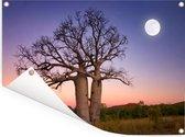 Volle maan bij zonsondergang over Afrikaanse baobab bomen Tuinposter 160x120 cm - Tuindoek / Buitencanvas / Schilderijen voor buiten (tuin decoratie) XXL / Groot formaat!