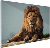Rustende leeuw op een rotsblok Glas 180x120 cm - Foto print op Glas (Plexiglas wanddecoratie) XXL / Groot formaat!