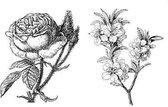 Transparante Stempels - Bloemen - 10 x 7cm – 2 Stuks - Maak prachtige kaarten en andere creatieve projecten