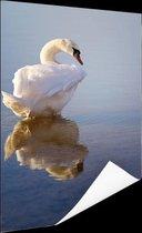 Zwaan  Poster 40x60 cm - Foto print op Poster (wanddecoratie)