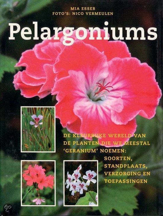 Pelargoniums - Mia Esser |