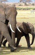 The Hacker-Proof Internet Address Password Book - Elephant Family