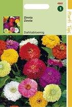Hortitops Zaden - Zinnia Dubbele Dahliabl. Gemengd