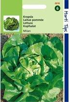 Kropsla Milan -  Lactuca sativa - set van 5 stuks