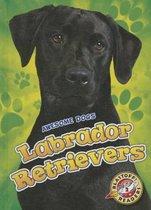 Labrador Retrievers Labrador Retrievers