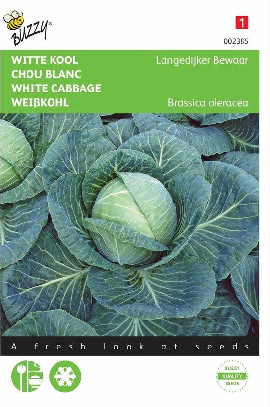 Witte Kool Langedijker Bewaar - Brassica oleracea - set van 8 stuks