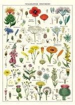 Poster Wildflowers - Cavallini & Co - schoolplaat