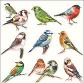 20x Servetten Vogels 33 x 33 cm - Vogels tafeldecoratie servetjes - Vogel thema papieren tafeldecoraties