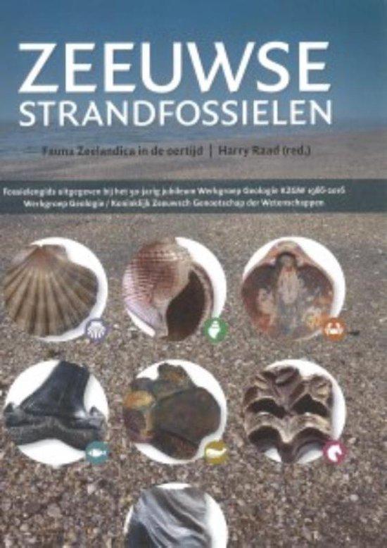 Zeeuwse strandfossielen - none |