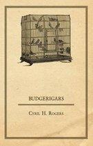 Budgerigars