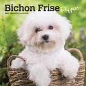 Bichon Frise Puppies 2021 Mini 7x7