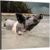 Dibond –Zwart Varkentje in het Water– 50x50 Foto op Aluminium (Met ophang)