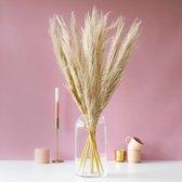 Pampas pluimen | 10 stuks | Pampas gras | Droogbloemen | 100cm