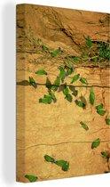 Sialia op de kleirotsen in het Manu National Park Canvas 80x120 cm - Foto print op Canvas schilderij (Wanddecoratie woonkamer / slaapkamer)