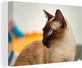 Siamese kat met mooie blauwe ogen Canvas 180x120 cm - Foto print op Canvas schilderij (Wanddecoratie woonkamer / slaapkamer) / Huisdieren Canvas Schilderijen XXL / Groot formaat!