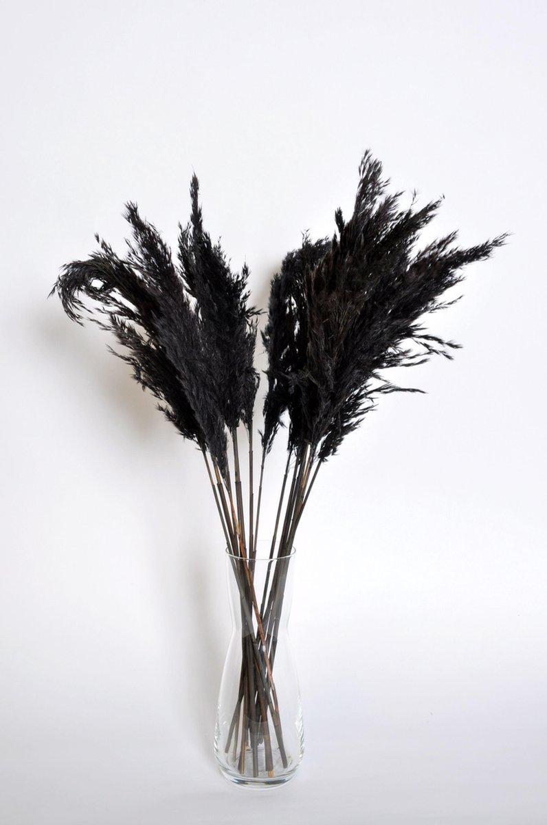 Rietpluimen   Pampas pluimen   Pampasgras   15 stuks   60 cm   Zwart