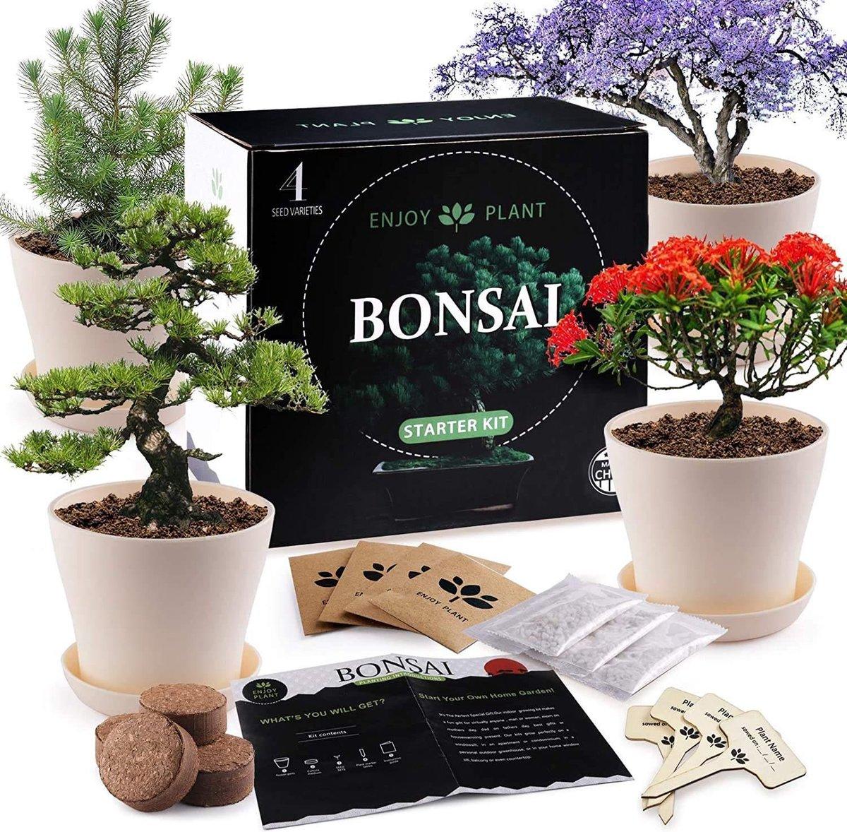 Bonsai Starters Kit - Bonsai Boompje - 5 Delige Set - 4 Soorten Zaden - Incl. E-book
