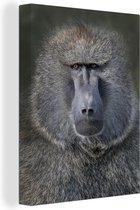 Close-up portret van een Baviaan Canvas 30x40 cm - klein - Foto print op Canvas schilderij (Wanddecoratie woonkamer / slaapkamer) / Wilde dieren Canvas Schilderijen