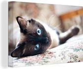 Liggende Burmees kat met blauwe ogen Canvas 180x120 cm - Foto print op Canvas schilderij (Wanddecoratie woonkamer / slaapkamer) / Huisdieren Canvas Schilderijen XXL / Groot formaat!