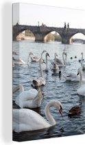 Zwanen en eenden in de rivier de Moldau met op de achtergrond een prachtige brug Canvas 120x180 cm - Foto print op Canvas schilderij (Wanddecoratie woonkamer / slaapkamer) XXL / Groot formaat!