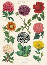 Vintage Poster Bloemen - Cavallini & Co Schoolplaat Botanica